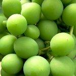 イメージ・葡萄の実