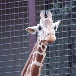 世界の動物園・動物誕生サイト