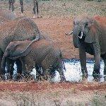 象たち(イメージ)