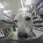 犬視点カメラ・犬POV