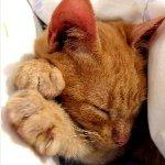 眠りに落ちていく子猫・6本