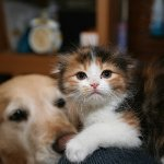 ネコのマッサージ職人
