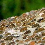 イギリスにある金の成る木