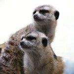 変な動物たちのカップル