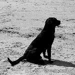 デンバーは有罪だ!人間チックな犬
