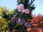 kamakura_flower.jpg