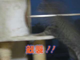 fujiko9102