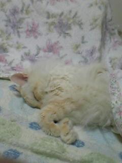 猫 パルボ ウイルス