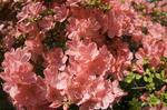 1266-pink-tsutsu.jpg