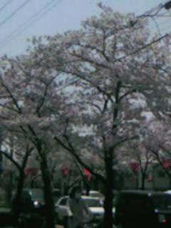 桜並木2アップ
