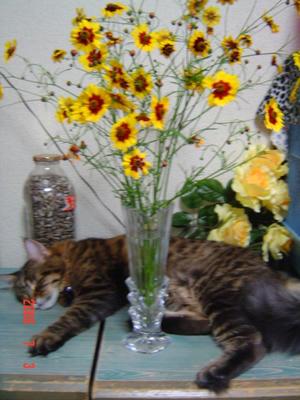 マーとお花