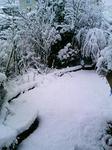 2008年12月22日 雪