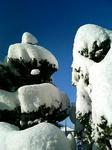 雪おばけみたいな木