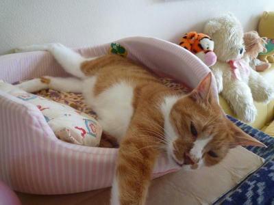 ベッドで寝るテンチャ