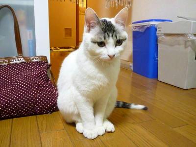 猫の里親会参加します 未来のママ、パパ会いに来てにゃん