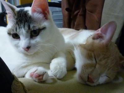 遊びたい猫と眠い猫