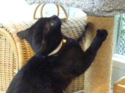 里親部集中の猫