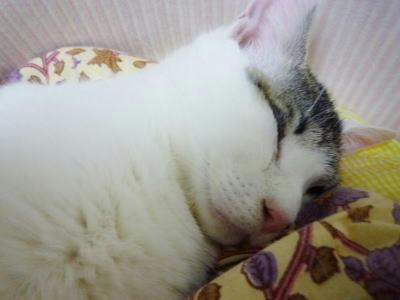 猫ベッドで睡眠中の猫さん