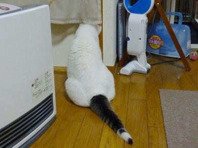 入れてください、の預かり猫ごまだれ