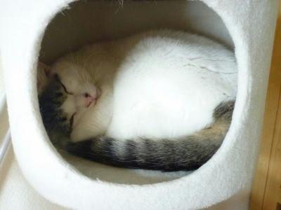 ねこちぐらの中で寝る猫