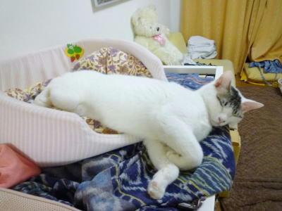 猫ベッドからかなりはみ出して寝る猫