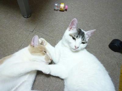 猫たちの小休止、大運動会の後です