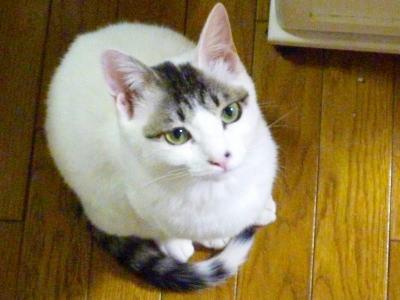 見上げる猫さん