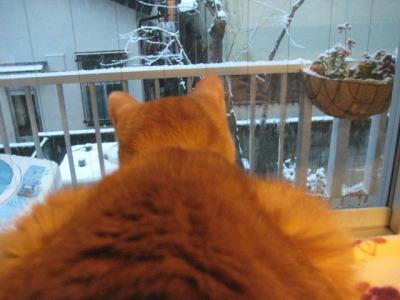 雪景色を眺める柊くん