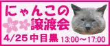 猫の譲渡会in中目黒4/25