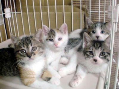 虐待現場付近で保護された子猫たち