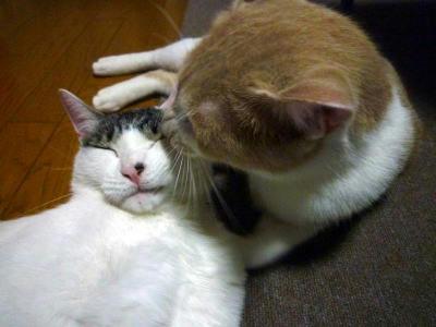少年猫に舐めてもらうごまだれ