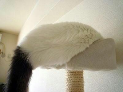 落ちそうな寝相の猫