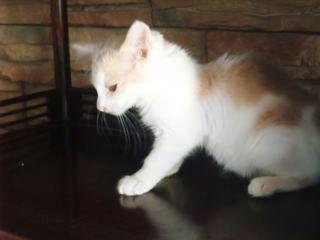 里親募集中の子猫マヨちゃん横顔