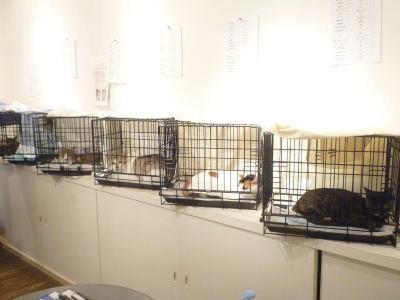 猫の里親会 南青山人猫共生会議