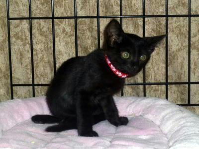 黒猫のクロ子ちゃん