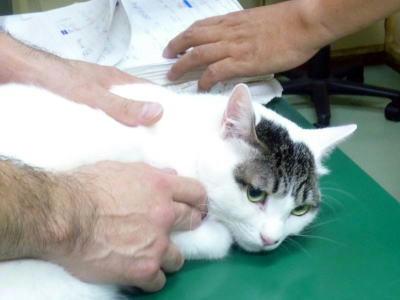 受診する保護猫ごまだれ君