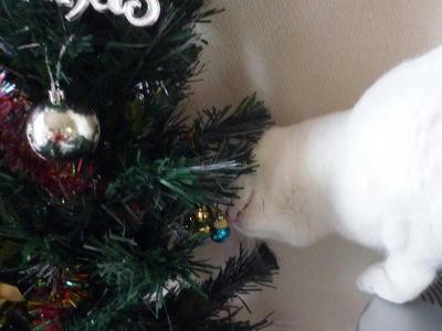 クリスマスツリーが気になるごまだれ