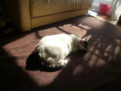 陽だまりでお昼寝