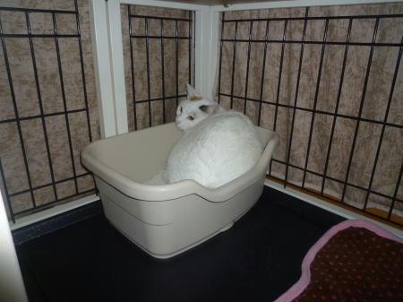 トイレに篭城するすあま
