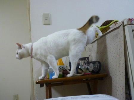 すあま家猫修行中里親様も募集中