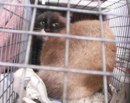 南相馬市保護猫