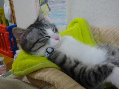 子猫の仰向け寝