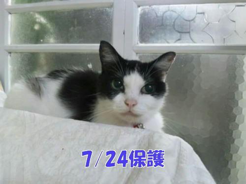 福島の被災猫、諦めないで