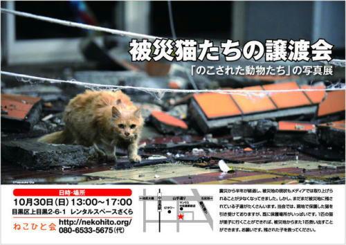 10/30被災猫の里親会のお知らせ
