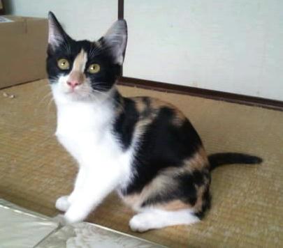 30日被災猫の譲渡会参加猫(子猫+α)