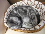 CAT018.JPG