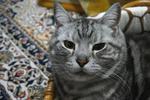 CAT020.jpg