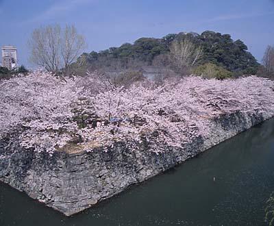 徳島城きれい