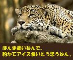 Animal_118.jpg