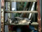 cat239.jpg
